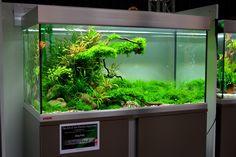 "4th plce winner @ ""The Art of Planted Aquarium"" by Oleg Foht. Pin by Aqua Poolkoh"