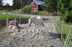 Have you ever noticed how horses will wear down paths in a pasture? It seems like no matter how much space they have, horses will follow the same paths (or tracks) every day as they move about. T...