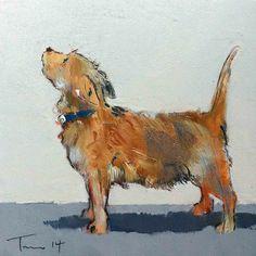 Tom Homewood | terrier Tom homewood