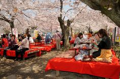 Yoshino, Japan For a more serene travel experience, head to the city of Yoshino in Japan and take in the beauty of the country's Hanami cherry blossom festival. While the festival starts as early as January, the bulk of the best blossoms happen in March. There's plenty of regions to soak in the pink clouds of flowers overtaking the blue sky, but Lonely Planet recommends the city of Yoshino as the best. Those willing to stick around can also take part in events like cherry blossom picnics and