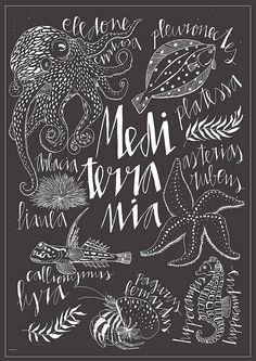 Mediterrania Vintage style Print. Original illustration of mediterranean creatures by Sira Lobo