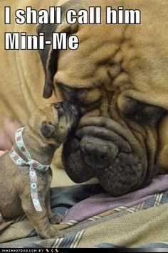 funny dog pictures - I shall call him Mini-Me