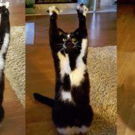 海外で「GoalKitty」というあだ名の猫が可愛いと注目を集めている。ゴールキティはなぜか両前足を高く上げ、…