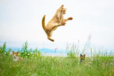 This Japanese Photographer Specializes In Shooting Ninja Cats, And The Result Is Too Purrfect