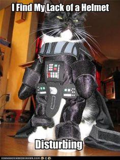 Darth Vader kitty