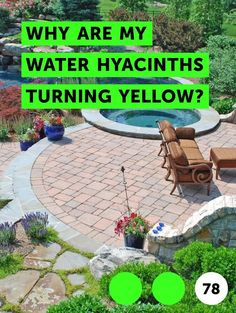 How to Care for the Coleus Plant. Coleus is an annual or tender perennial that p. Pieris Japonica, How To Make Fish, Wild Onions, Sweet Watermelon, Pyrus, Peach Trees, Water Hyacinth, Grass Seed, Types Of Soil