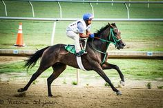 Morning gallop. Thoroughbred race horse photography.