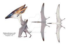 One more pterosaur. This time is Thalassodromeus sethi with its double-lobed crest. Tapejaromorph pterosaurs definitely have amazing crests! Creature Feature, Creature Design, Reptiles, Mammals, Cool Monsters, Extinct Animals, Creature Concept Art, Prehistoric Creatures, Fantasy Creatures
