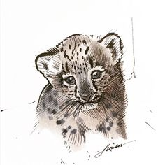 Kitten Drawing, Snow Leopard, Cat Lovers, Sims, Owl, Sketches, Drawings, Illustration, Painting