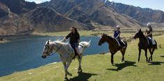 Horse riding trek in New Zealand