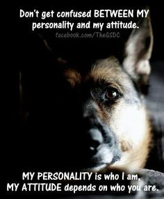 GSD's have life figured out, they are so smart ;-)