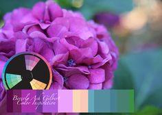 Color Inspiration - Magenta Hydrangea, color wheel, color palette
