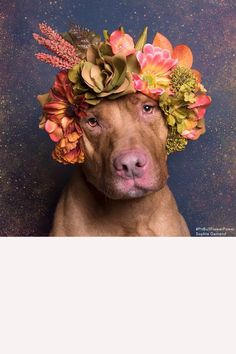 How these flower crowns are saving these adorable pitbulls lives.
