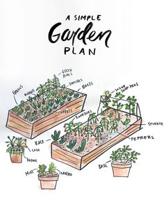 A Simple Garden Plan to help you plan your first garden.