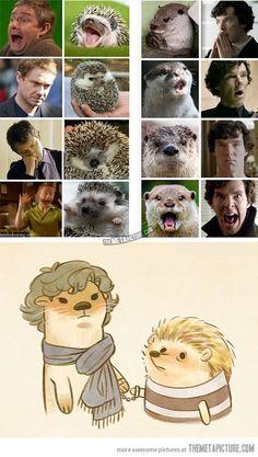 Sherlock and John = hedgehog and otter #funny #sherlock #watson