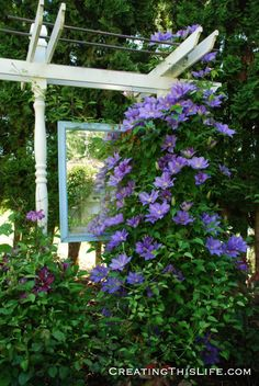 An Oregon Garden in Pictures · Creating This Life Oregon Garden, Summer Heat, Clematis, Beautiful Gardens, Garden Landscaping, Lush, Flora, The Incredibles, Outdoor Structures