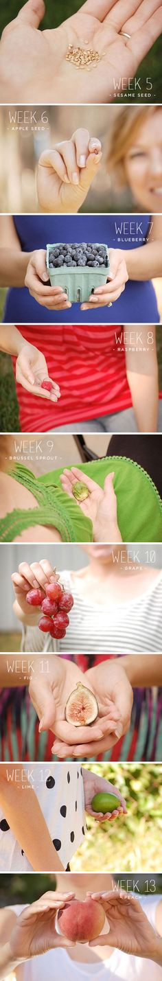 first trimester ::: fruit of the womb, document pregnancy, bump, pregnant, week
