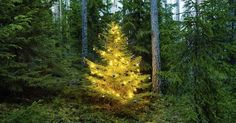 How green is your christmas tree? Prep for the holidays while also being sustainable via a blog on @HuffPost  http://ift.tt/2jEJFkT
