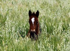 Horse / morning little one...