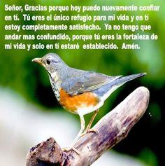 delicados-aves16FB