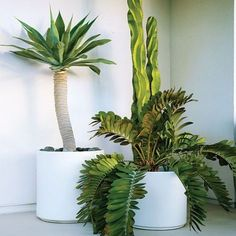 One-plant pots Just one plant went into each of these white ceramic 'Cylinder' containers, from Gainey Ceramics.  A single plant with a bold, sculptural shape is easier on the eye than a mixed planting. And a white pot allows it to shine. You don't have to buy large, expensive specimens―smaller agaves, ferns, other other plants suitable to your area will work this way, too.