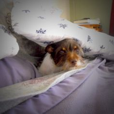 The Grouchy Puppy October Newsletter is here! Pillow Forts, Dog Lovers, Flora, Highlights, Adoption, Foundation, October, Meet, Puppies