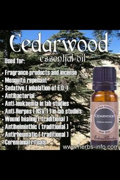 Himalayan Cedarwood trees (a close relative of Atlas Cedarwood) were thought to be indestructible for centuries. By using Himalayan Cedarwood essential oil, we have the chance to embody and harness th Healing Oils, Aromatherapy Oils, Healing Herbs, Young Living Oils, Young Living Essential Oils, Doterra Essential Oils, Essential Oil Blends, Cedarwood Essential Oil Uses, Edens Garden Essential Oils
