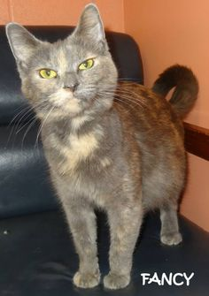 RESCUED!  **delivered 5 babies on 4/7, need to go with momma** Tag #8008 Name is Fancy  Torti Female VERY friendly girl!  Located at 2396 W Genesee Street, Lapeer, Mi. For more information, please call 810-667-0236 Adoption hours are  M-F 9:30-12, 12:30-4:30, except Wednesday-closed at noon and open Saturday 9-2  https://www.facebook.com/267166810020812/photos/a.820048901399264.1073742140.267166810020812/820050288065792/?type=3&theater