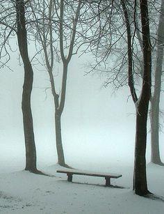♂ Empty snow forset