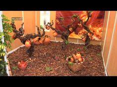 http://www.suip.tv Cobertura en vídeo  para internet de evento Feria Nacional de Alfarería y Cerámica de España, Nace 2011.