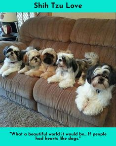 Click the link to learn more Shih Tzu #ShihTzu Please click here for more