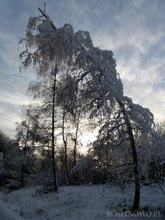 Bieszczady zimą 2