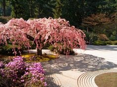 Cherry Tree Blossoms Over Rock Garden in the Japanese Gardens, Washington Park, Portland, Oregon Photographic Print by Janis Miglavs - AllPosters.co.uk