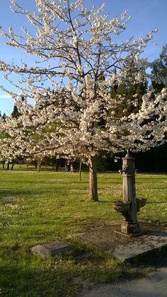 Spring is coming #spring #primavera #parco  #parcomiralfiore #pesaro