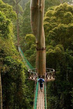 Borneo Rainforest Canopy Walkway in Malaysia