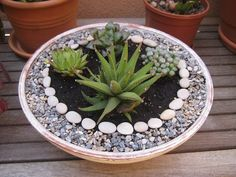 Zen garden with succulents #ZenGarden