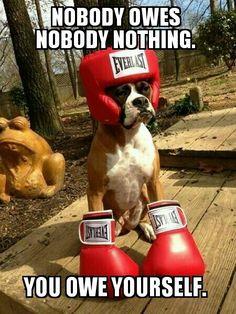 Boxing boxer. Rocky dog. Inspirational. Rocky Balboa.