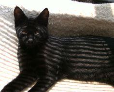 Stripes   ~  (my little Monkey)