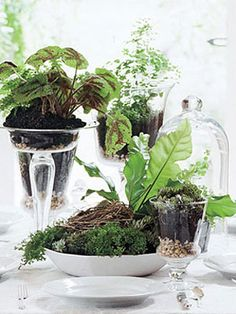 Decorating With Nature How To Display Houseplants On Pinterest Succulents Plants And Air