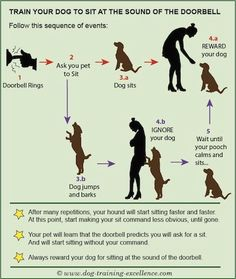 Dog Obedience Training - CLICK THE PICTURE for Lots of Dog Care and Training Ideas. #dogtraining #dogtrainingideas