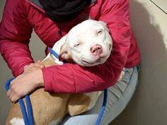 deze hond is blij !!