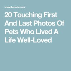 20 Touching First And Last Photos Of Pets Who Lived A Life Well-Loved