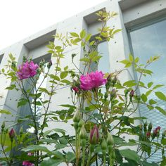 Rose #exterior Seigo Miyake