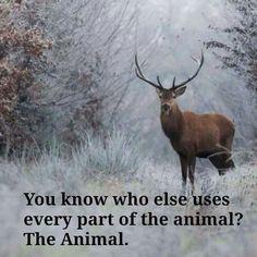 so please leave them alone #vegan