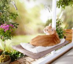 Sunny Seat cat bed. Great if you don't have wide enough windowsills for your kitty to sit or if (like us) you only have sliding glass doors.