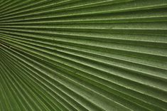 One of many great free stock photos from Pexels. This photo is about leaf, palm, texture Close Up Photography, Macro Photography, Original Wallpaper, Hd Wallpaper, Green Leaves, Plant Leaves, Crazy Paving, Clear Blue Sky, Parts Of A Plant