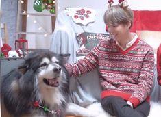 Daegu, Pretty Boys, Namjoon, Dog Training, Husky, Kitty, In This Moment, Animals, Submissive