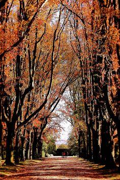 Serralves - forest