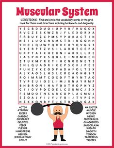 Human muscular system word search puzzle worksheet activity for kids. Muscular System For Kids, Human Muscular System, Human Body Unit, Human Body Systems, Science Worksheets, Science Lessons, Math For Kids, Puzzles For Kids, Muscular System Anatomy