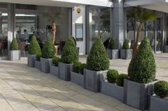 IOTA planters at the Marco Polo restaurant